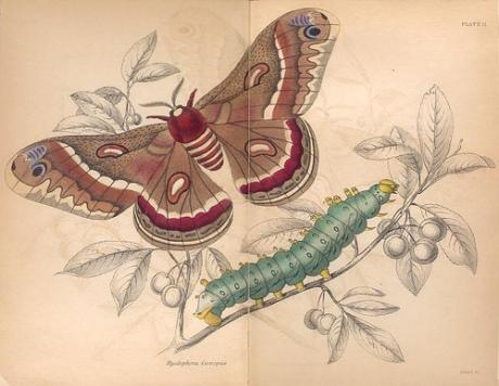 mariposas-exoticas-1