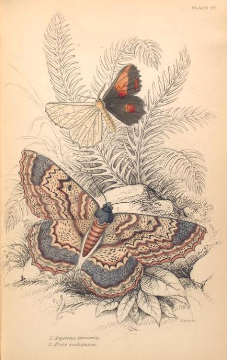 mariposas-exoticas-10
