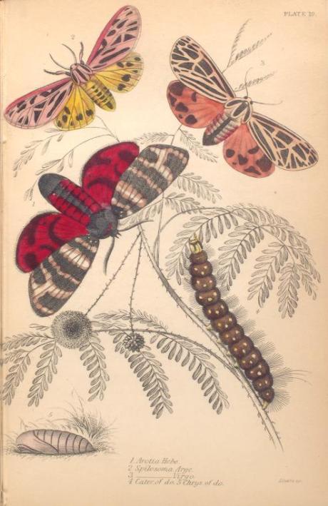 mariposas-exoticas-11