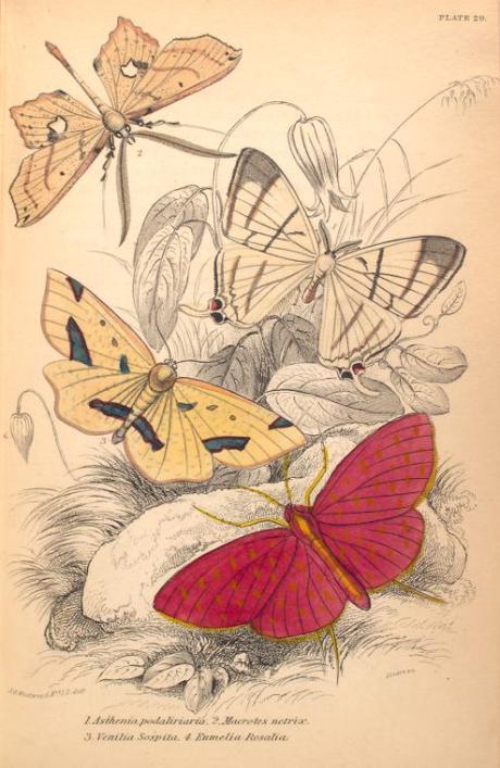 mariposas-exoticas-12