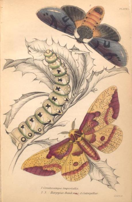 mariposas-exoticas-13