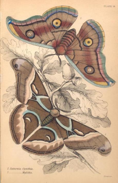 mariposas-exoticas-2