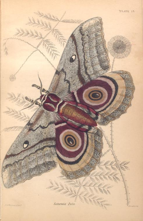 mariposas-exoticas-3