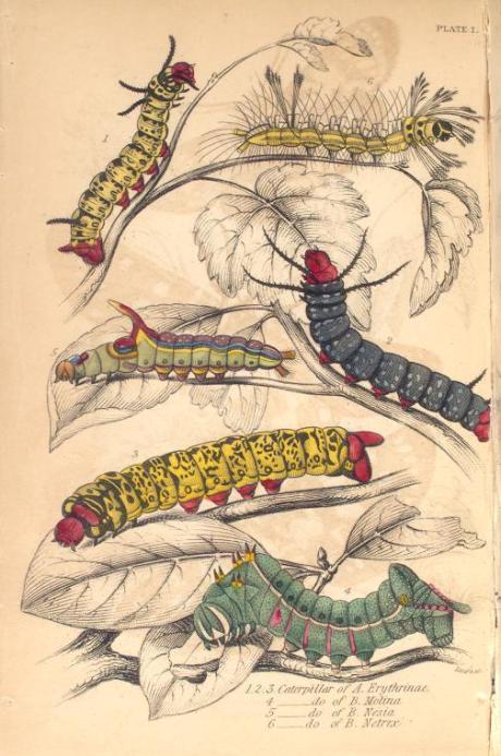 mariposas-exoticas-4