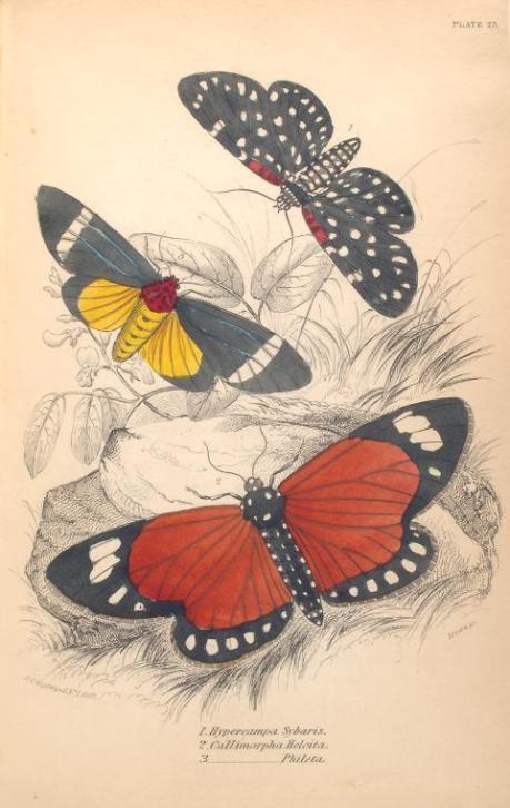 mariposas-exoticas-5