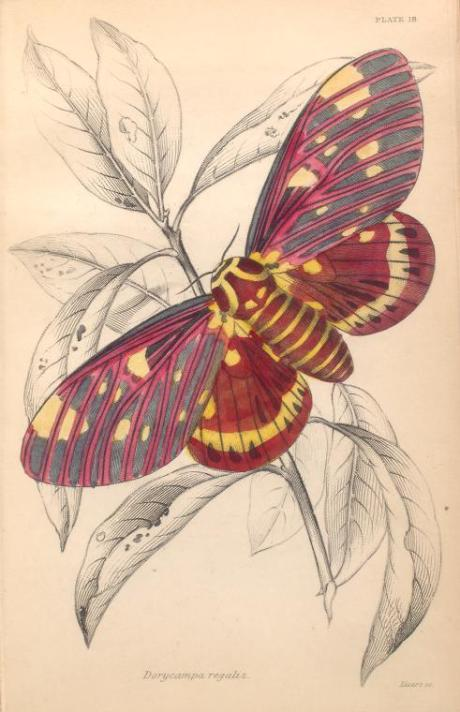 mariposas-exoticas-6
