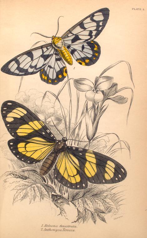 mariposas-exoticas-7