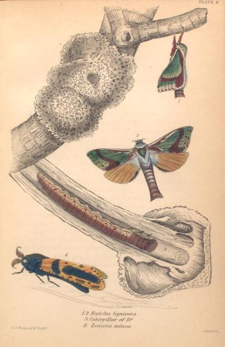 mariposas-exoticas-8