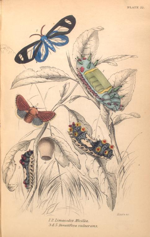 mariposas-exoticas-9
